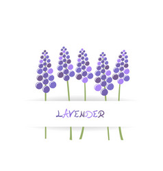 card with stylized lavender vector image