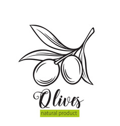 hand drawn olives icon vector image vector image