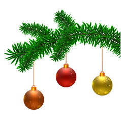 fir tree branch and christmas balls vector image
