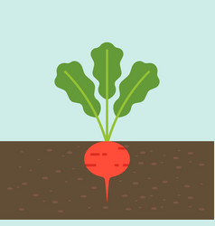 radish vegetable with root in soil texture flat vector image