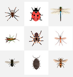 Set of bug realistic symbols with black widow vector