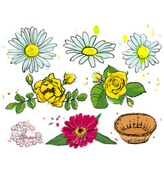 Set of summer flowers camomile yellow rose vector
