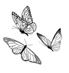 Set three butterflies ink sketch hand drawn vector