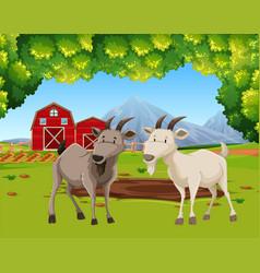 Two goats in farm scene vector