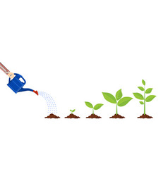 young plant with watering can vector image