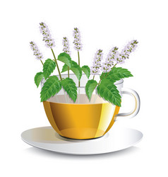 aromatic mint tea in a transparent cup vector image