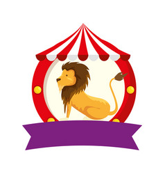 Circus lion domesticated in tent vector