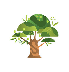 olive tree garden plant with ripe fruits vector image