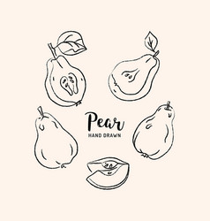 pear drawing hand drawn pears sketch of vector image