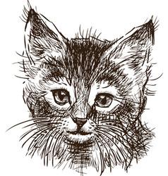 sketch head a kitten vector image