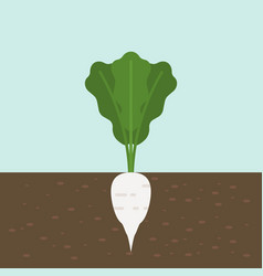 white radish vegetable with root in soil texture vector image