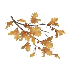 Autumn oak leaves branch vector