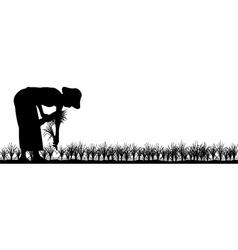 transplanting rice vector image