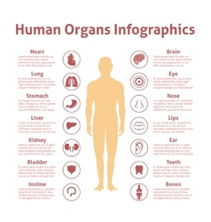 Human infographic set vector image
