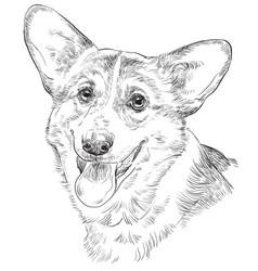 pembroke welsh corgi hand drawing portrait vector image