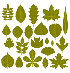 Set of green leaves from different trees vector