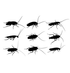 Silhouettes of cockroaches vector