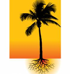 palm roots vector image