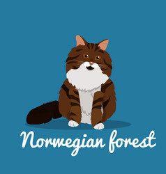 norwegian forest cute cat animal vector image