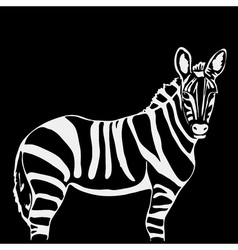 Hand-drawn pencil graphics zebra Engraving stencil vector image vector image