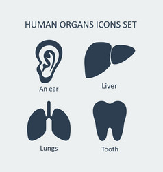 Human organs icons set vector
