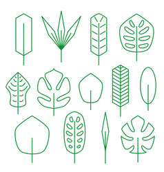 minimalistic linear palm leaf set vector image