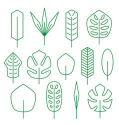 Minimalistic linear palm leaf set vector