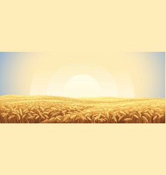 Rural landscape with a field wheat and sunrise vector