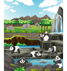 scene with pandas and elephants at zoo vector image