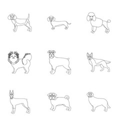 sheepdog dachshund bernard and other web icon vector image