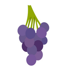 Bunch of blue grapes icon isolated vector