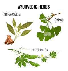 ayurvedic herbs set of plant branches isolated on vector image vector image