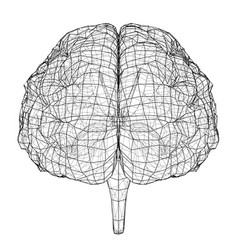 3d outline brain rendering of 3d vector image