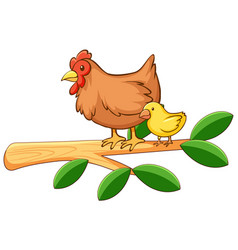 Hen and chick on white background vector