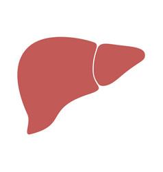 Liver color vector