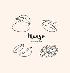 mango fruit drawing hand drawn mango vector image