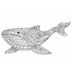 Whale coloring for adults vector