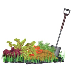 Autumn harvest vegetables on the grass and shovel vector image