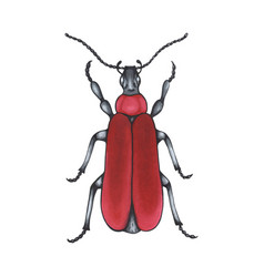 Bug red hand drawn insect detailed vector