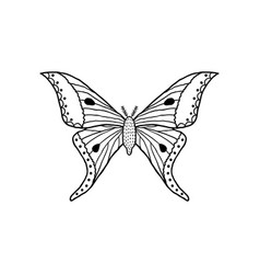 Butterfly in doodle style vector