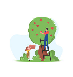Farmers family father and daughter pick apple vector