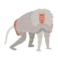 Macaque monkey rare animal vector