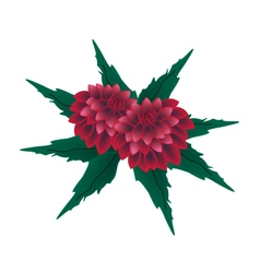 Red Dahlia Flowers on A White Background vector