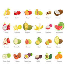 Kiwano coconut and banana set vector