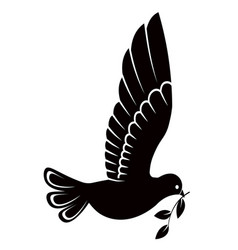 pigeon or dove white bird vector image