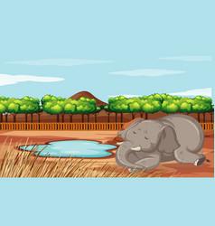 Scene with sleepy elephant in zoo vector
