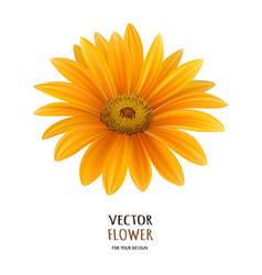 hand drawn realistic of vector image vector image