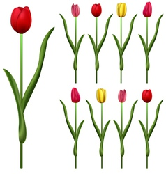 Tulips small vector image