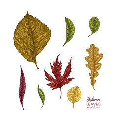 autumn leaves isolated on vector image