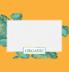 cover design transparent product package window vector image